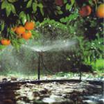 Gotejadores e Micro Sprays